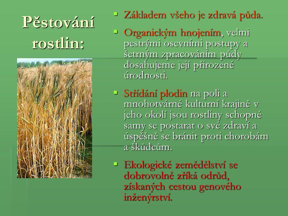 Pěstování rostlin:  Základem všeho je zdravá půda.  Organickým hnojením, velmi pestrými osevními postupy a šetrným zpracováním půdy dosahujeme její