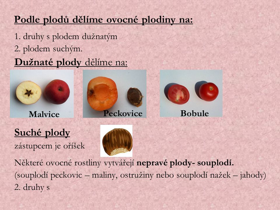 Podle plodů dělíme ovocné plodiny na: 1. druhy s plodem dužnatým 2. plodem suchým. Dužnaté plody dělíme na: Suché plody zástupcem je oříšek Některé ov