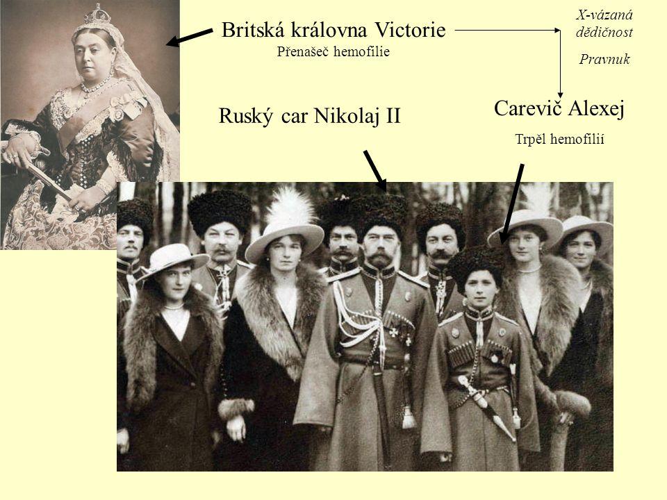 Britská královna Victorie Přenašeč hemofilie Ruský car Nikolaj II Carevič Alexej Trpěl hemofilií X-vázaná dědičnost Pravnuk