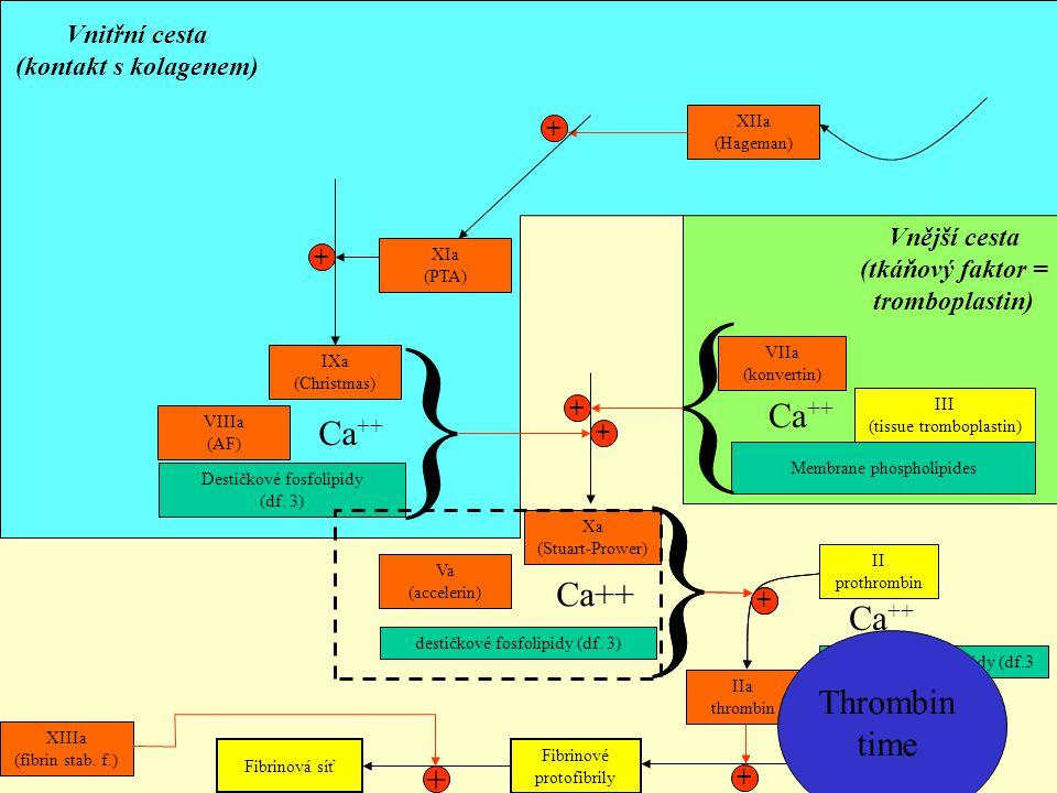 XIIa (Hageman) Destičkové fosfolipidy (df. 3) Ca ++ IXa (Christmas) + Membrane phospholipides III (tissue tromboplastin) { + Ca ++ VIIa (konvertin) Vn