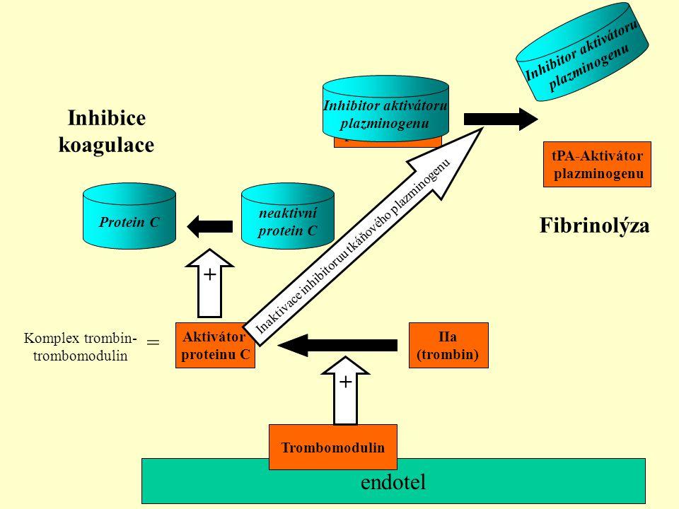 endotel Trombomodulin tPA-Aktivátor plazminogenu Inhibitor aktivátoru plazminogenu IIa (trombin) Aktivátor proteinu C + neaktivní protein C Protein C