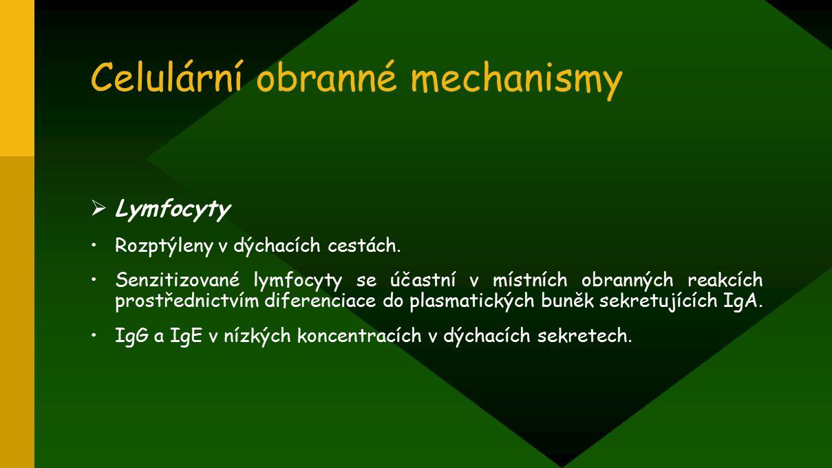 Celulární obranné mechanismy  Lymfocyty Rozptýleny v dýchacích cestách. Senzitizované lymfocyty se účastní v místních obranných reakcích prostřednict