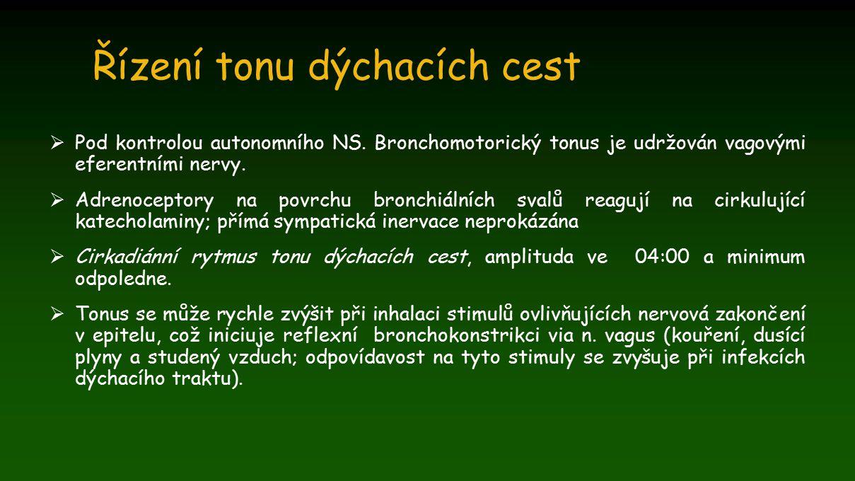 Řízení tonu dýchacích cest  Pod kontrolou autonomního NS. Bronchomotorický tonus je udržován vagovými eferentními nervy.  Adrenoceptory na povrchu b