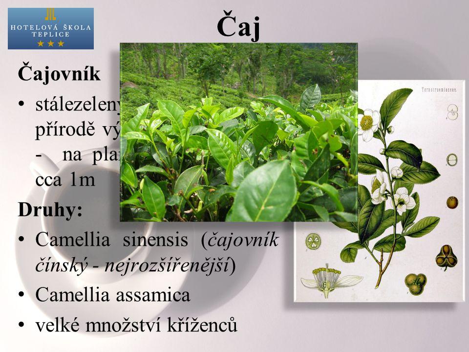 Čaj Čajovník stálezelený keř, dorůstající v přírodě výšky 5 až 15 metrů - na plantážích se udržuje cca 1m Druhy: Camellia sinensis (čajovník čínský - nejrozšířenější) Camellia assamica velké množství kříženců
