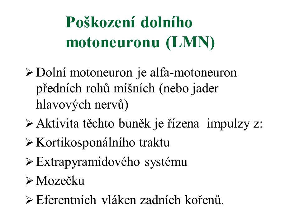 Poškození dolního motoneuronu (LMN)  Dolní motoneuron je alfa-motoneuron předních rohů míšních (nebo jader hlavových nervů)  Aktivita těchto buněk j