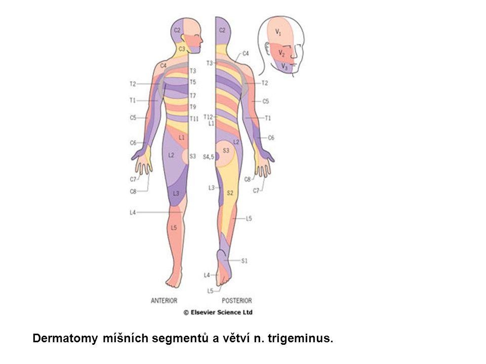 Dermatomy míšních segmentů a větví n. trigeminus.