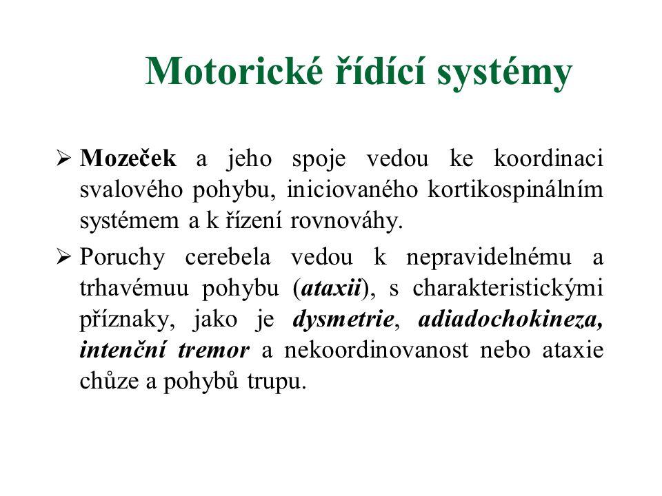 Motorické řídící systémy  Mozeček a jeho spoje vedou ke koordinaci svalového pohybu, iniciovaného kortikospinálním systémem a k řízení rovnováhy.  P