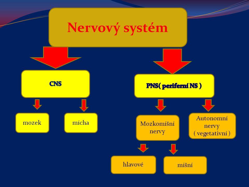 Nervový systém mozekmícha Mozkomíšní nervy Autonomní nervy ( vegetativní ) hlavové míšní