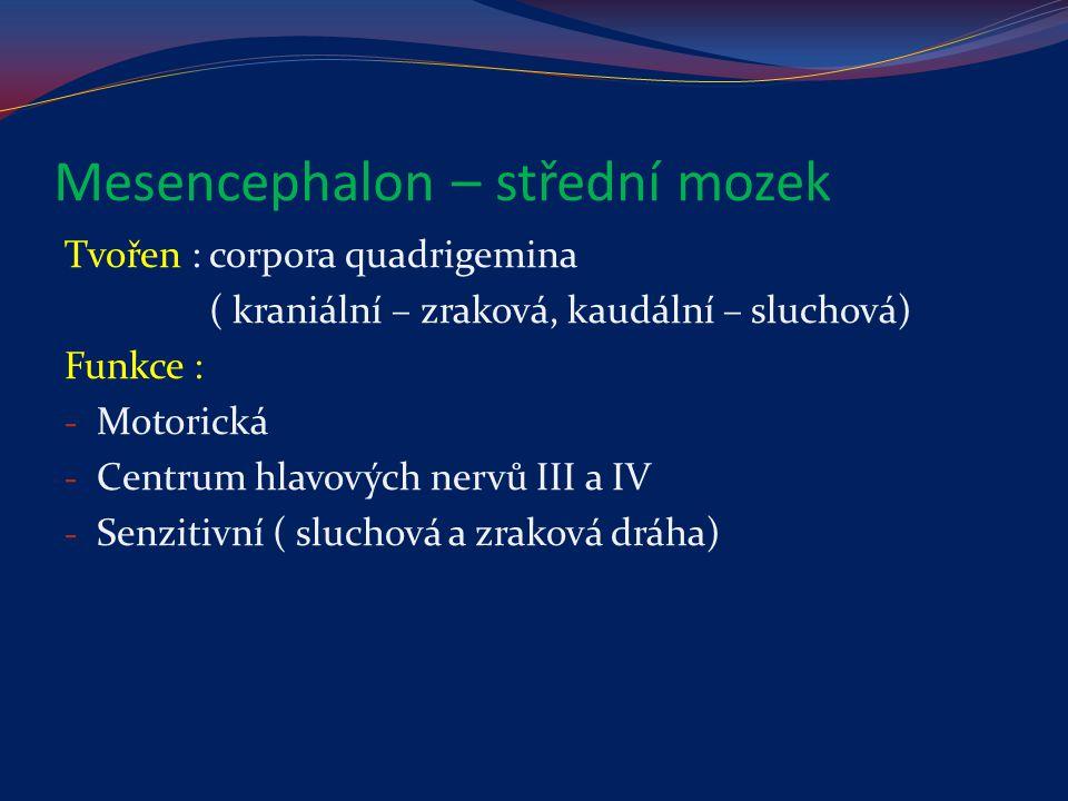 Mesencephalon – střední mozek Tvořen : corpora quadrigemina ( kraniální – zraková, kaudální – sluchová) Funkce : - Motorická - Centrum hlavových nervů