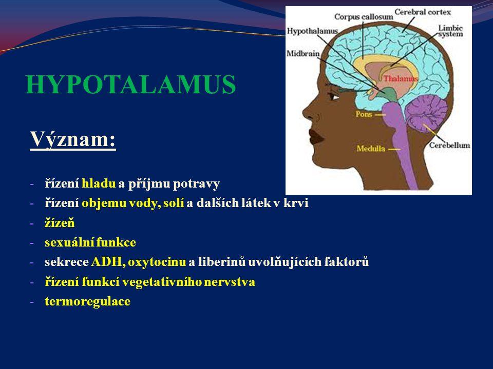 HYPOTALAMUS Význam: - řízení hladu a příjmu potravy - řízení objemu vody, solí a dalších látek v krvi - žízeň - sexuální funkce - sekrece ADH, oxytoci