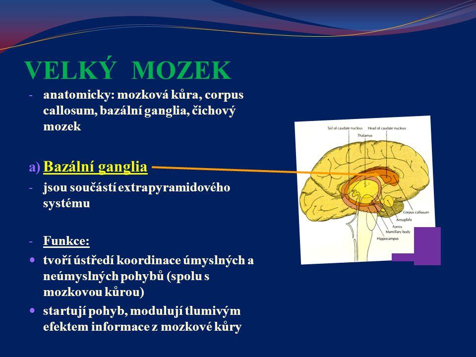 VELKÝ MOZEK - anatomicky: mozková kůra, corpus callosum, bazální ganglia, čichový mozek a) Bazální ganglia - jsou součástí extrapyramidového systému -