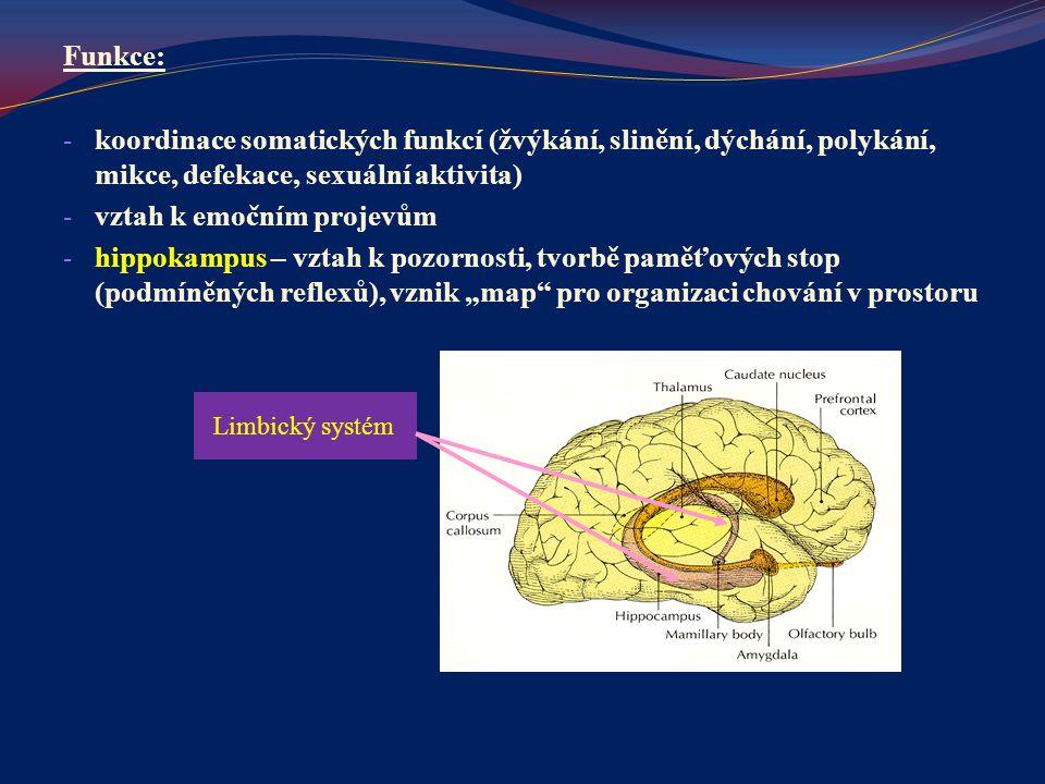 Funkce: - koordinace somatických funkcí (žvýkání, slinění, dýchání, polykání, mikce, defekace, sexuální aktivita) - vztah k emočním projevům - hippoka