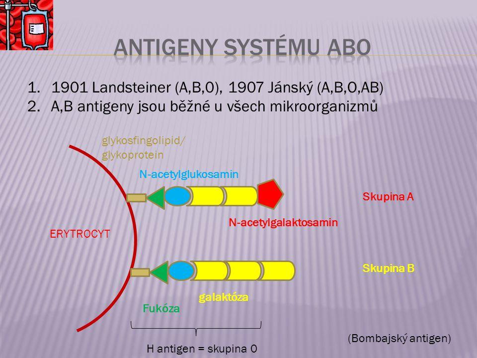 1.1901 Landsteiner (A,B,0), 1907 Jánský (A,B,O,AB) 2.A,B antigeny jsou běžné u všech mikroorganizmů ERYTROCYT glykosfingolipid/ glykoprotein Fukóza N-acetylglukosamin galaktóza N-acetylgalaktosamin Skupina A Skupina B H antigen = skupina 0 (Bombajský antigen)