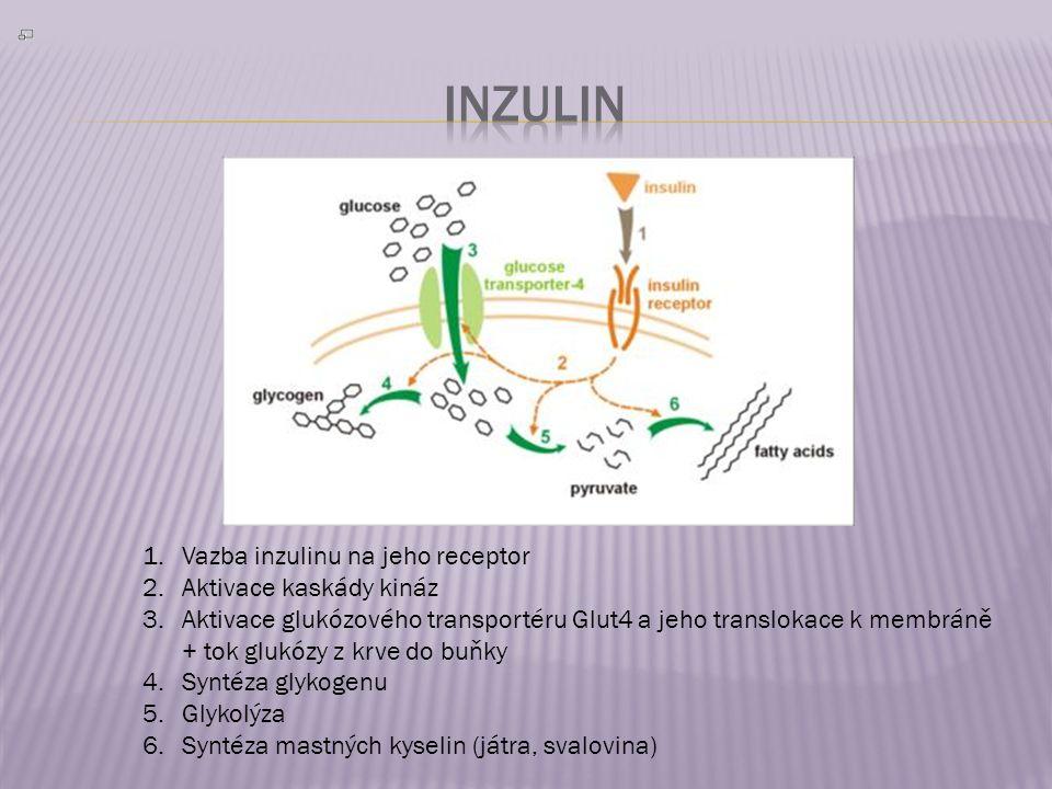 1.Vazba inzulinu na jeho receptor 2.Aktivace kaskády kináz 3.Aktivace glukózového transportéru Glut4 a jeho translokace k membráně + tok glukózy z krve do buňky 4.Syntéza glykogenu 5.Glykolýza 6.Syntéza mastných kyselin (játra, svalovina)