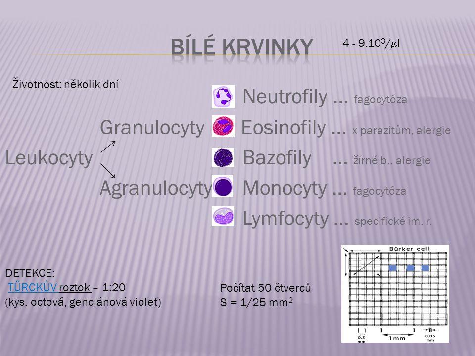 Neutrofily … fagocytóza Granulocyty Eosinofily … x parazitům, alergie LeukocytyBazofily … žírné b., alergie Agranulocyty Monocyty … fagocytóza Lymfocy