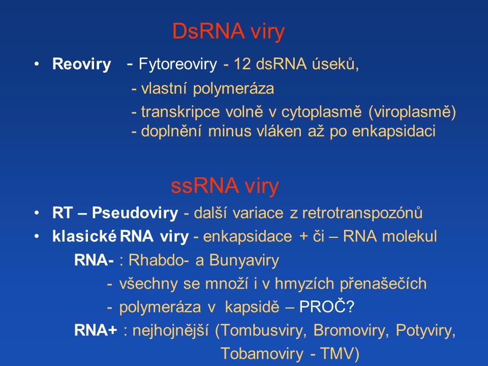 DsRNA viry Reoviry - Fytoreoviry - 12 dsRNA úseků, - vlastní polymeráza - transkripce volně v cytoplasmě (viroplasmě) - doplnění minus vláken až po en