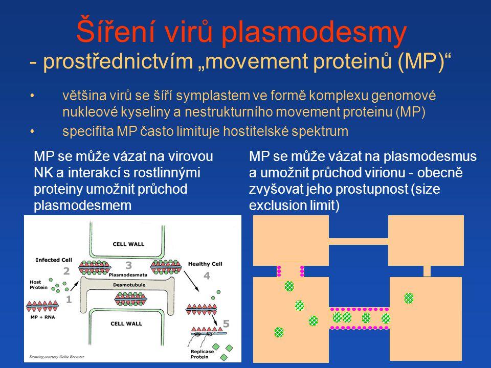 """- prostřednictvím """"movement proteinů (MP)"""" většina virů se šíří symplastem ve formě komplexu genomové nukleové kyseliny a nestrukturního movement prot"""