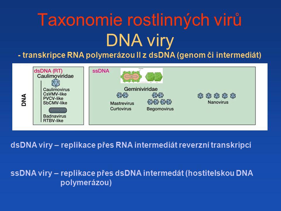 Taxonomie rostlinných virů DNA viry - transkripce RNA polymerázou II z dsDNA (genom či intermediát) dsDNA viry – replikace přes RNA intermediát reverz