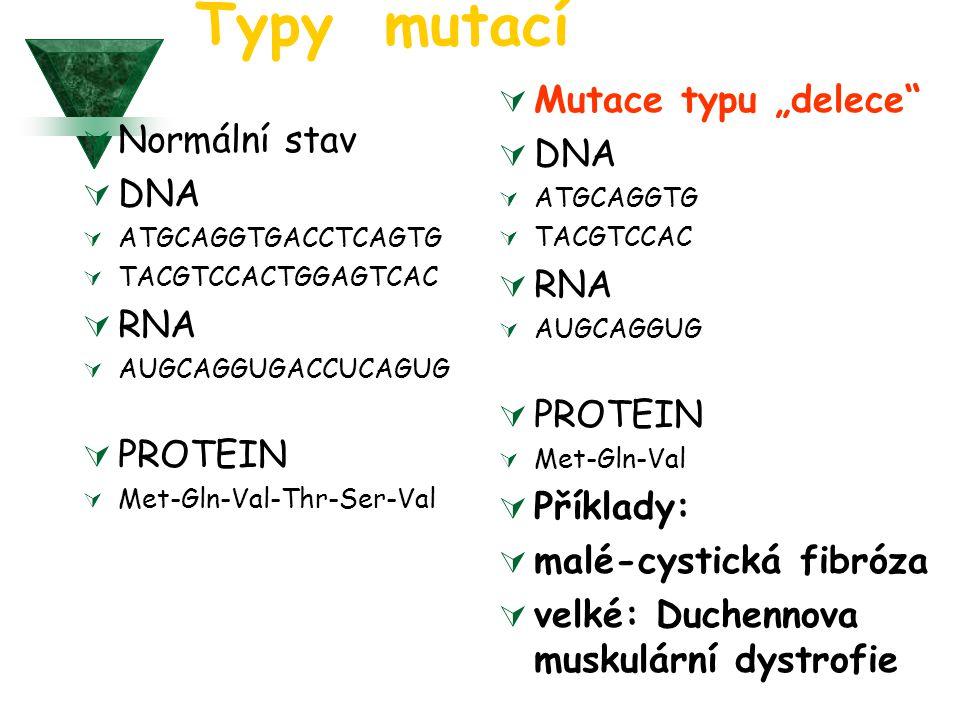 Typy mutací  Normální stav  DNA  ATGCAGGTGACCTCAGTG  TACGTCCACTGGAGTCAC  RNA  AUGCAGGUGACCUCAGUG  PROTEIN  Met-Gln-Val-Thr-Ser-Val  Mutace ty