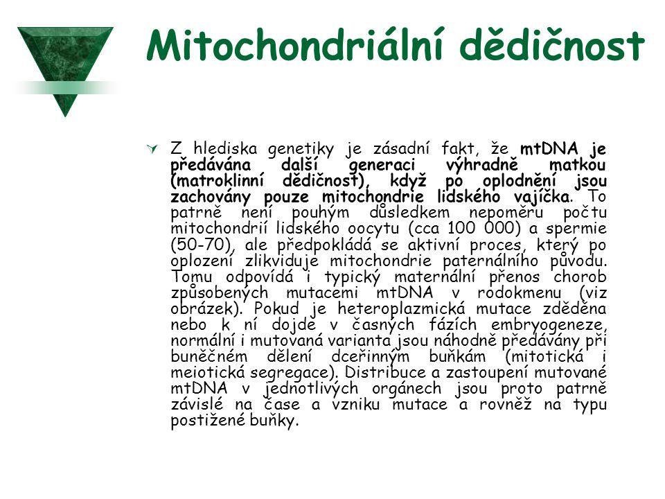 Mitochondriální dědičnost  Z hlediska genetiky je zásadní fakt, že mtDNA je předávána další generaci výhradně matkou (matroklinní dědičnost), když po