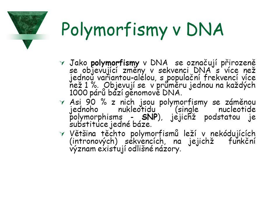 Polymorfismy v DNA  Jako polymorfismy v DNA se označují přirozeně se objevující změny v sekvenci DNA s více než jednou variantou-alelou, s populační