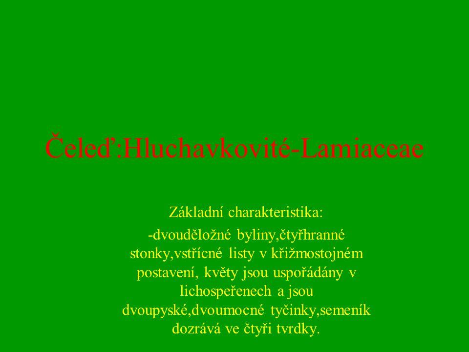 Čeleď:Hluchavkovité-Lamiaceae Základní charakteristika: -dvouděložné byliny,čtyřhranné stonky,vstřícné listy v křižmostojném postavení, květy jsou usp
