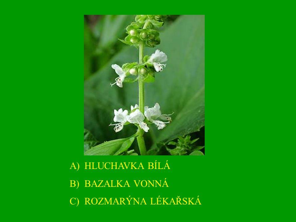 A)HLUCHAVKA BÍLÁ B)BAZALKA VONNÁ C)ROZMARÝNA LÉKAŘSKÁ
