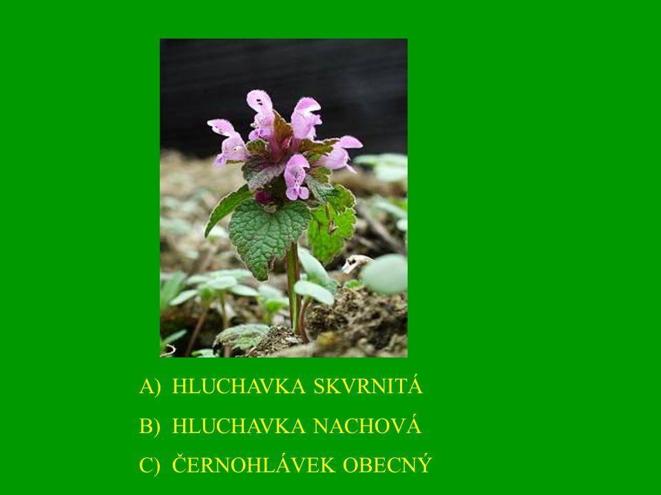A)HLUCHAVKA SKVRNITÁ B)HLUCHAVKA NACHOVÁ C)ČERNOHLÁVEK OBECNÝ