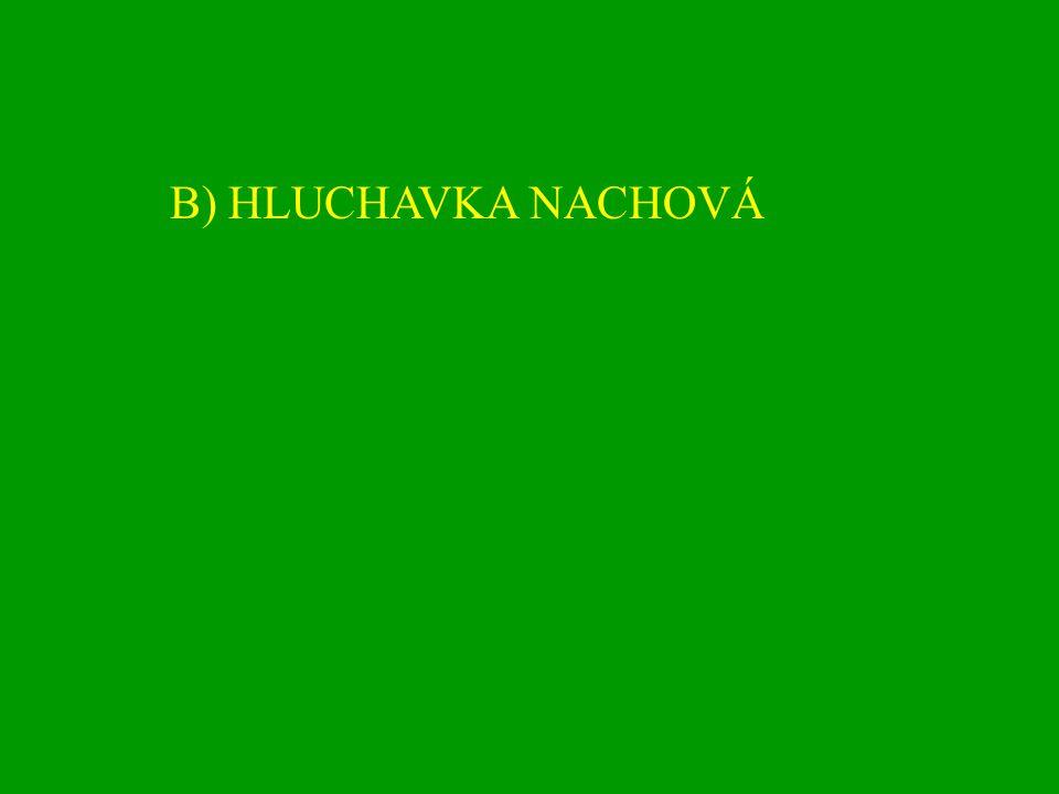 B) HLUCHAVKA NACHOVÁ