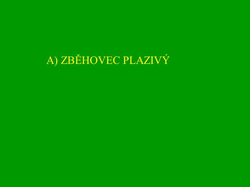 A) ZBĚHOVEC PLAZIVÝ
