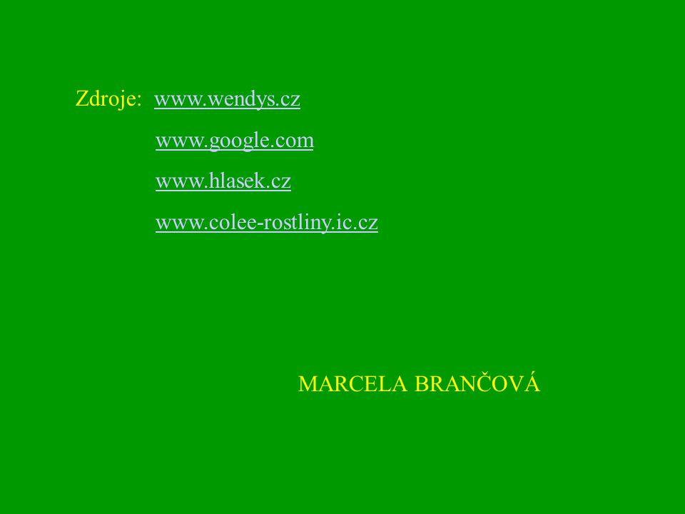 Zdroje: www.wendys.czwww.wendys.cz www.google.com www.hlasek.cz www.colee-rostliny.ic.cz MARCELA BRANČOVÁ