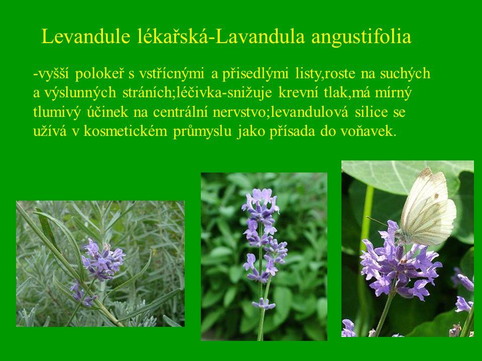 Levandule lékařská-Lavandula angustifolia -vyšší polokeř s vstřícnými a přisedlými listy,roste na suchých a výslunných stráních;léčivka-snižuje krevní