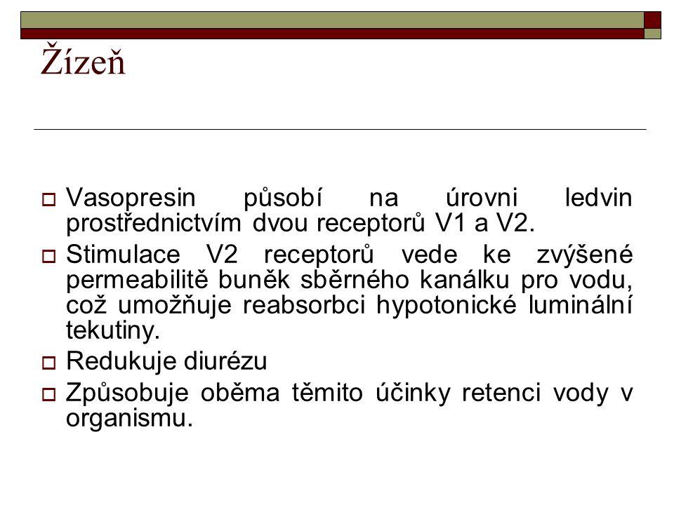 Žízeň  Vasopresin působí na úrovni ledvin prostřednictvím dvou receptorů V1 a V2.  Stimulace V2 receptorů vede ke zvýšené permeabilitě buněk sběrnéh