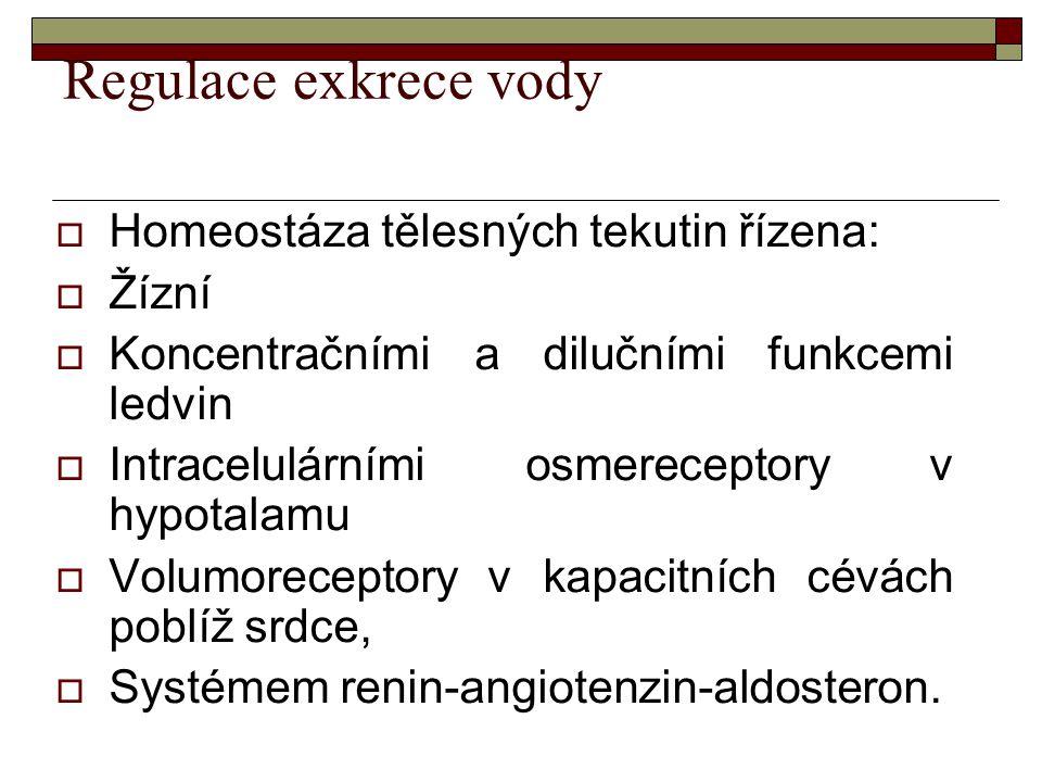 Regulace exkrece vody  Homeostáza tělesných tekutin řízena:  Žízní  Koncentračními a dilučními funkcemi ledvin  Intracelulárními osmereceptory v h