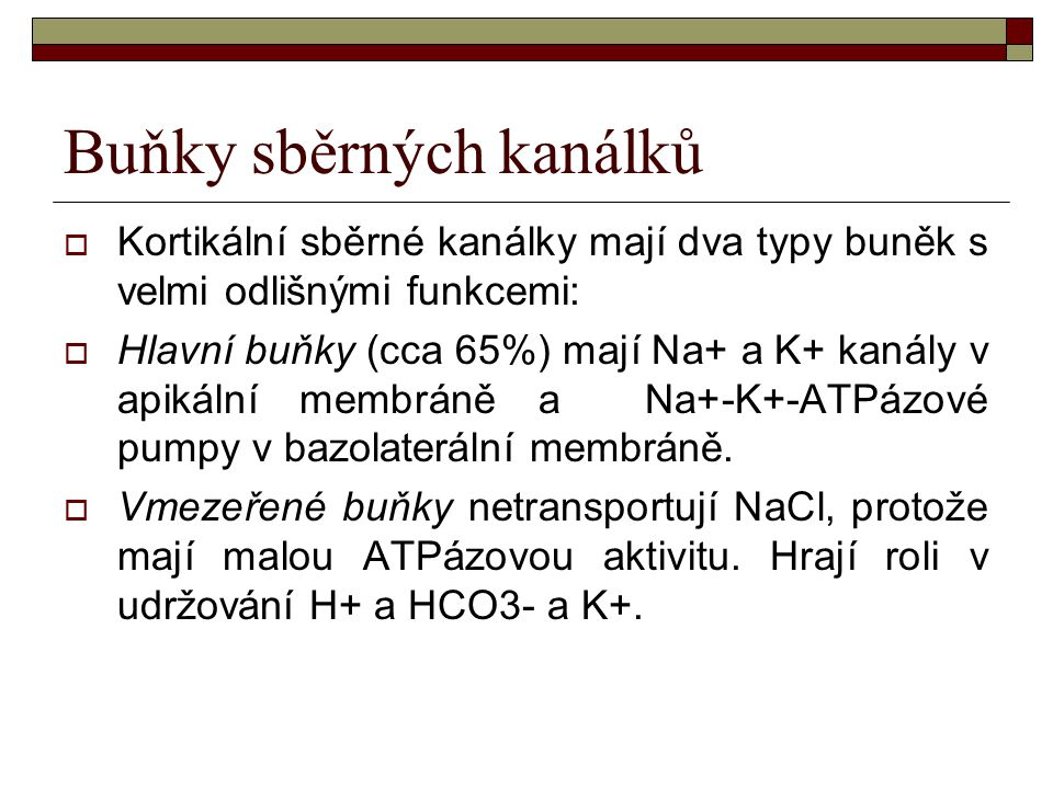 Buňky sběrných kanálků  Kortikální sběrné kanálky mají dva typy buněk s velmi odlišnými funkcemi:  Hlavní buňky (cca 65%) mají Na+ a K+ kanály v api
