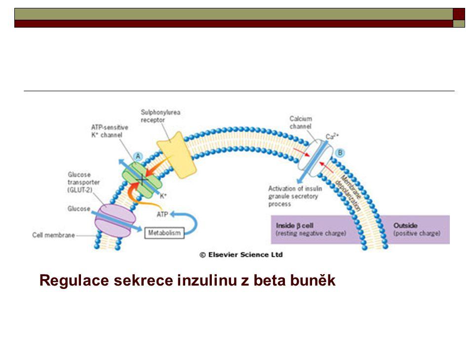 Regulace sekrece inzulinu z beta buněk