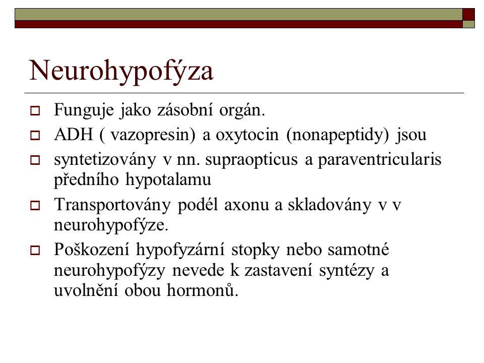 Neurohypofýza  Funguje jako zásobní orgán.  ADH ( vazopresin) a oxytocin (nonapeptidy) jsou  syntetizovány v nn. supraopticus a paraventricularis p