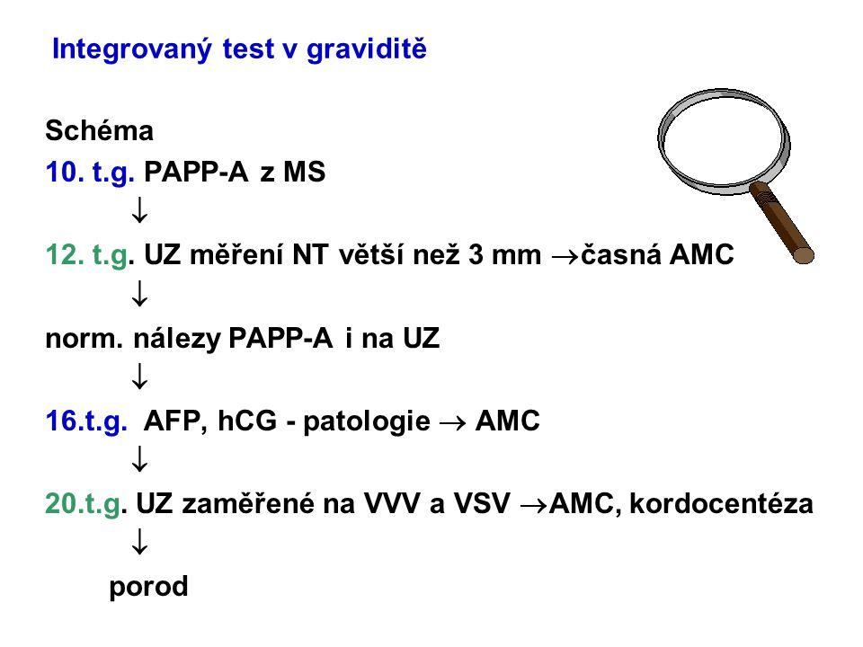 Integrovaný test v graviditě Schéma 10. t.g. PAPP-A z MS  12. t.g. UZ měření NT větší než 3 mm  časná AMC  norm. nálezy PAPP-A i na UZ  16.t.g. AF