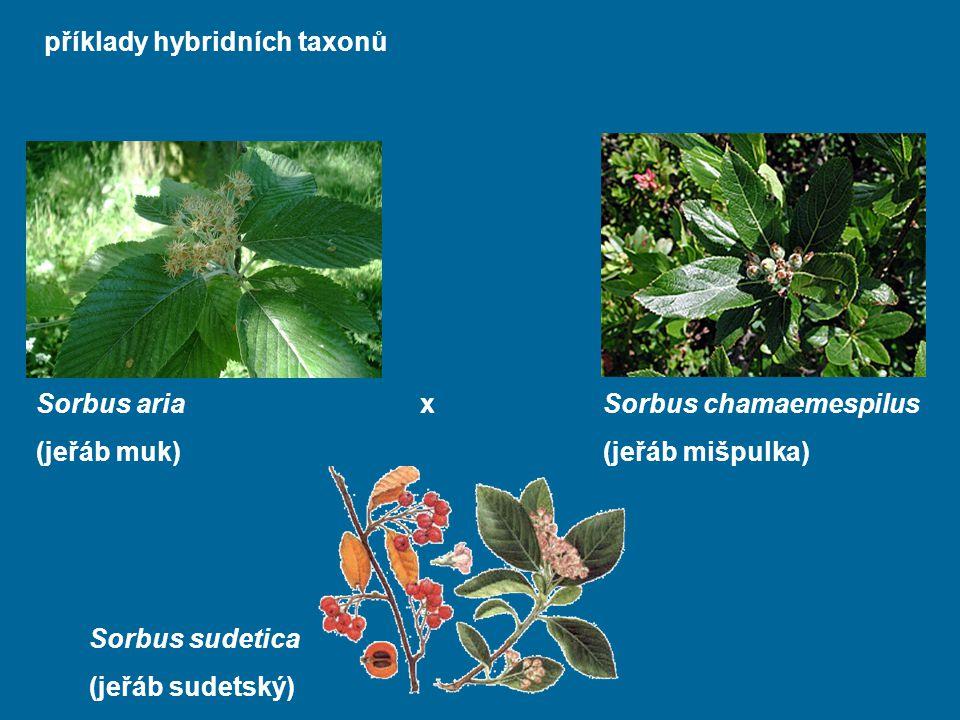 příklady hybridních taxonů Sorbus sudetica (jeřáb sudetský) Sorbus chamaemespilus (jeřáb mišpulka) Sorbus ariax (jeřáb muk)