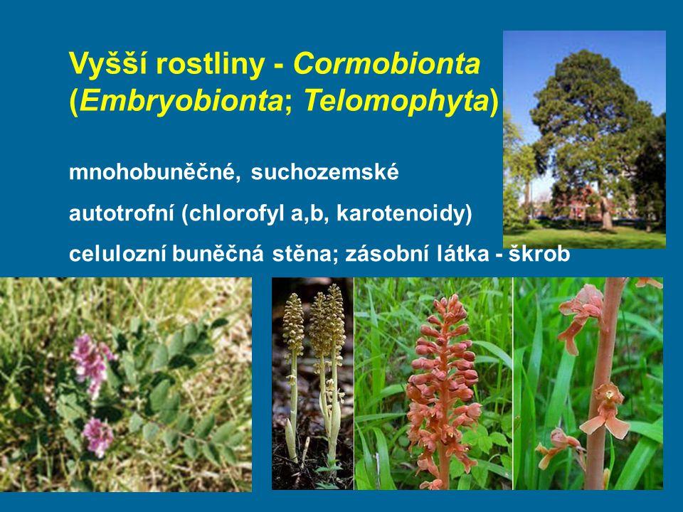 Vyšší rostliny - Cormobionta (Embryobionta; Telomophyta) mnohobuněčné, suchozemské autotrofní (chlorofyl a,b, karotenoidy) celulozní buněčná stěna; zá