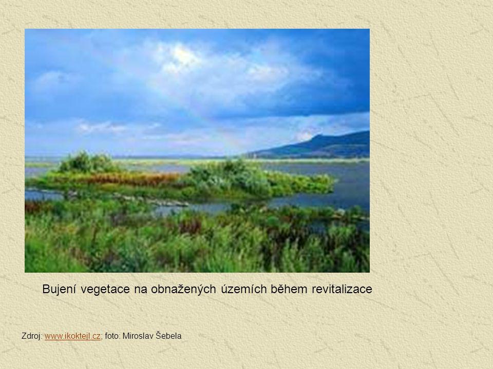 Bujení vegetace na obnažených územích během revitalizace Zdroj: www.ikoktejl.cz; foto: Miroslav Šebelawww.ikoktejl.cz