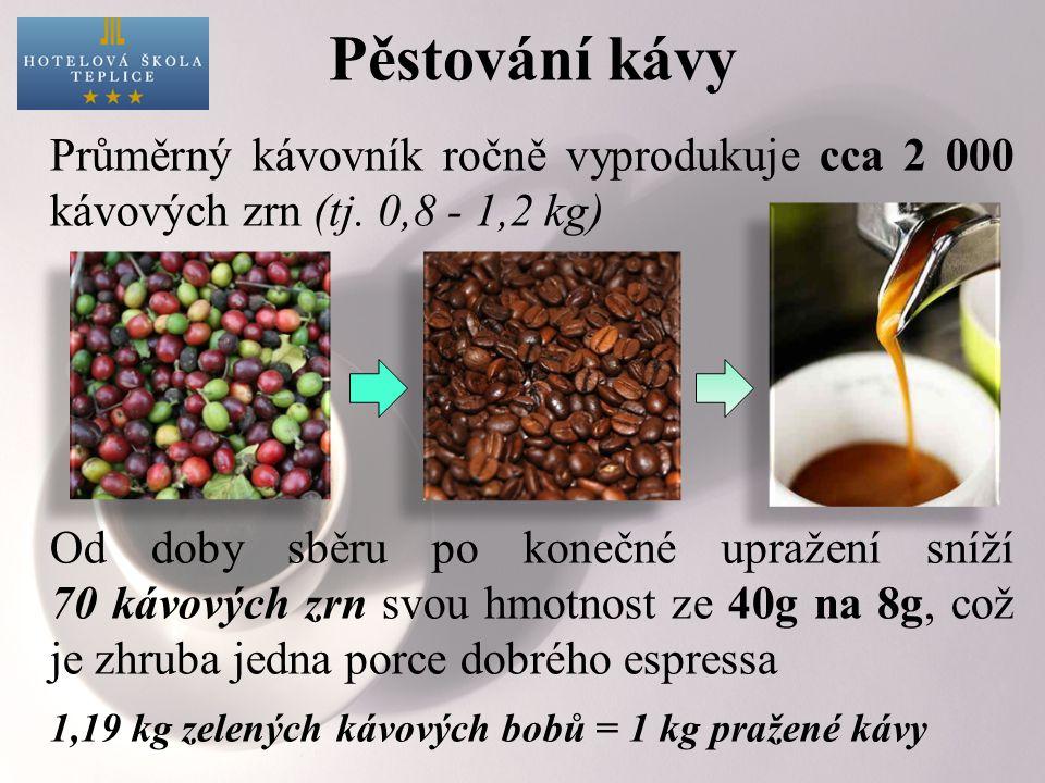 Průměrný kávovník ročně vyprodukuje cca 2 000 kávových zrn (tj.