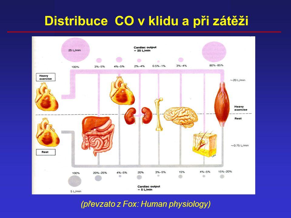 Distribuce CO v klidu a při zátěži (převzato z Fox: Human physiology)
