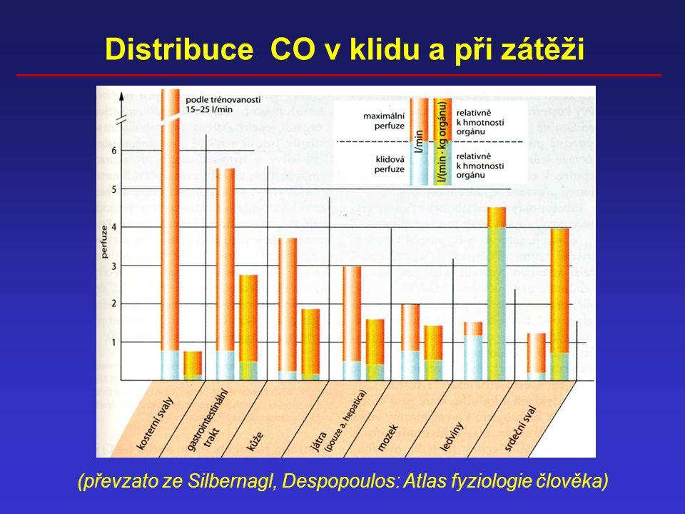 (převzato ze Silbernagl, Despopoulos: Atlas fyziologie člověka) Distribuce CO v klidu a při zátěži