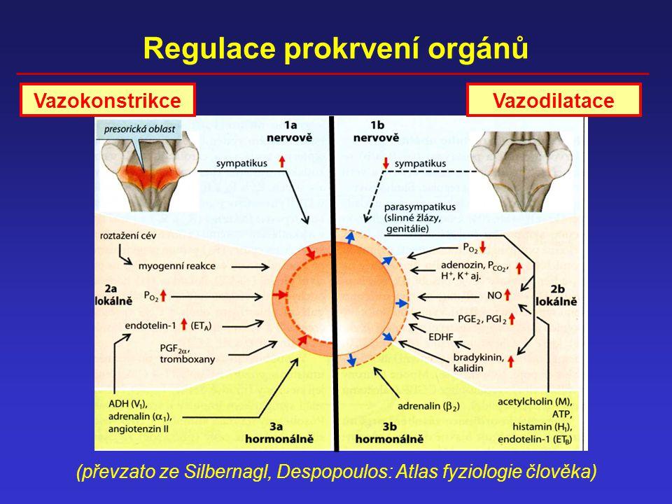 Regulace prokrvení orgánů (převzato ze Silbernagl, Despopoulos: Atlas fyziologie člověka) VazokonstrikceVazodilatace