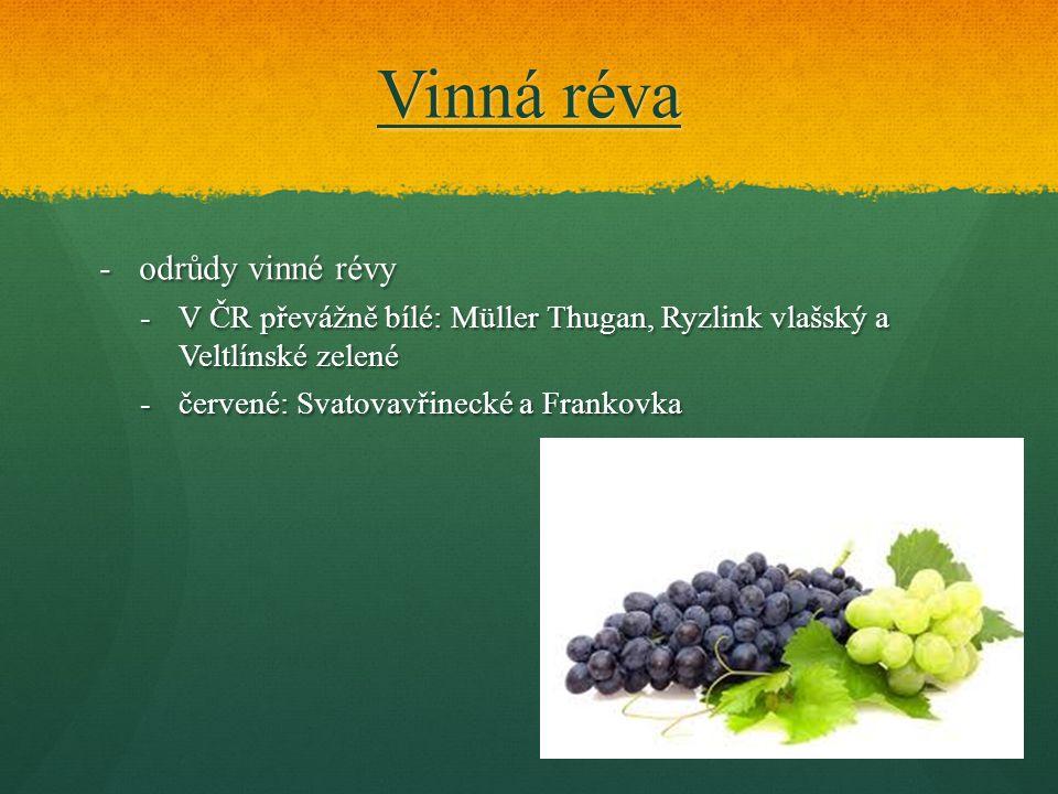 Vinná réva -odrůdy vinné révy -V ČR převážně bílé: Müller Thugan, Ryzlink vlašský a Veltlínské zelené -červené: Svatovavřinecké a Frankovka