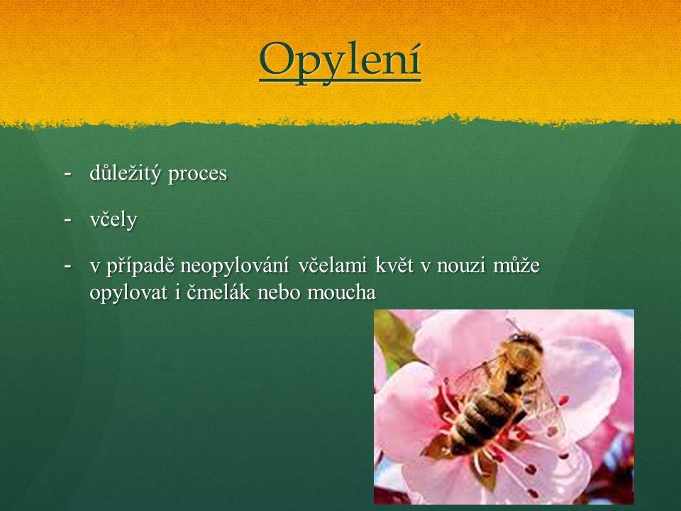 Opylení -důležitý proces -včely -v případě neopylování včelami květ v nouzi může opylovat i čmelák nebo moucha