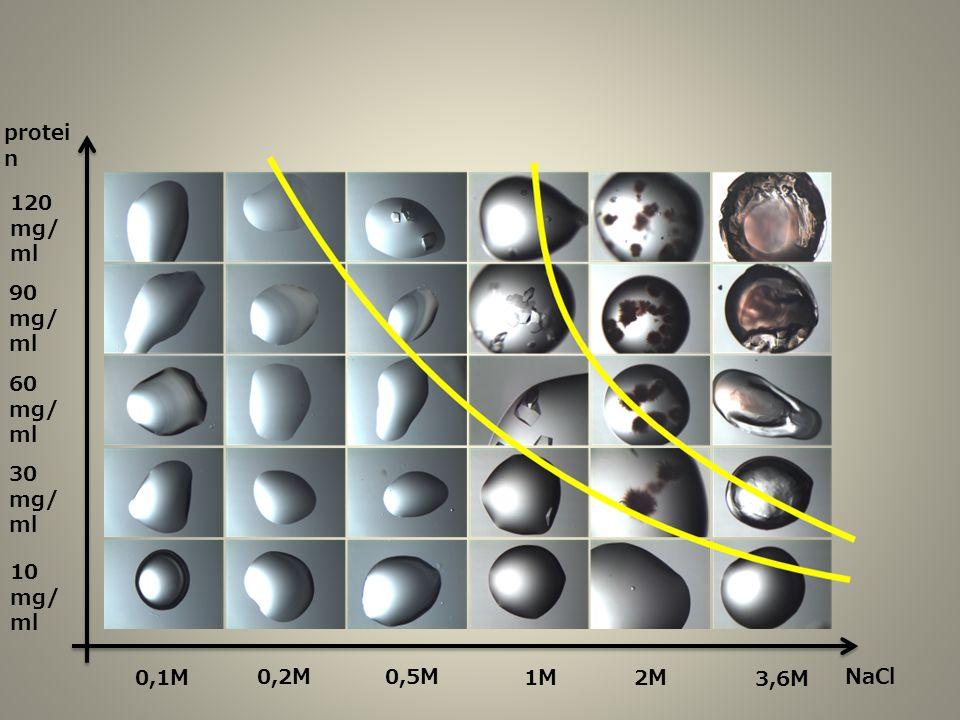 protei n NaCl 120 mg/ ml 90 mg/ ml 60 mg/ ml 30 mg/ ml 10 mg/ ml 0,1M 0,2M0,5M 1M2M 3,6M