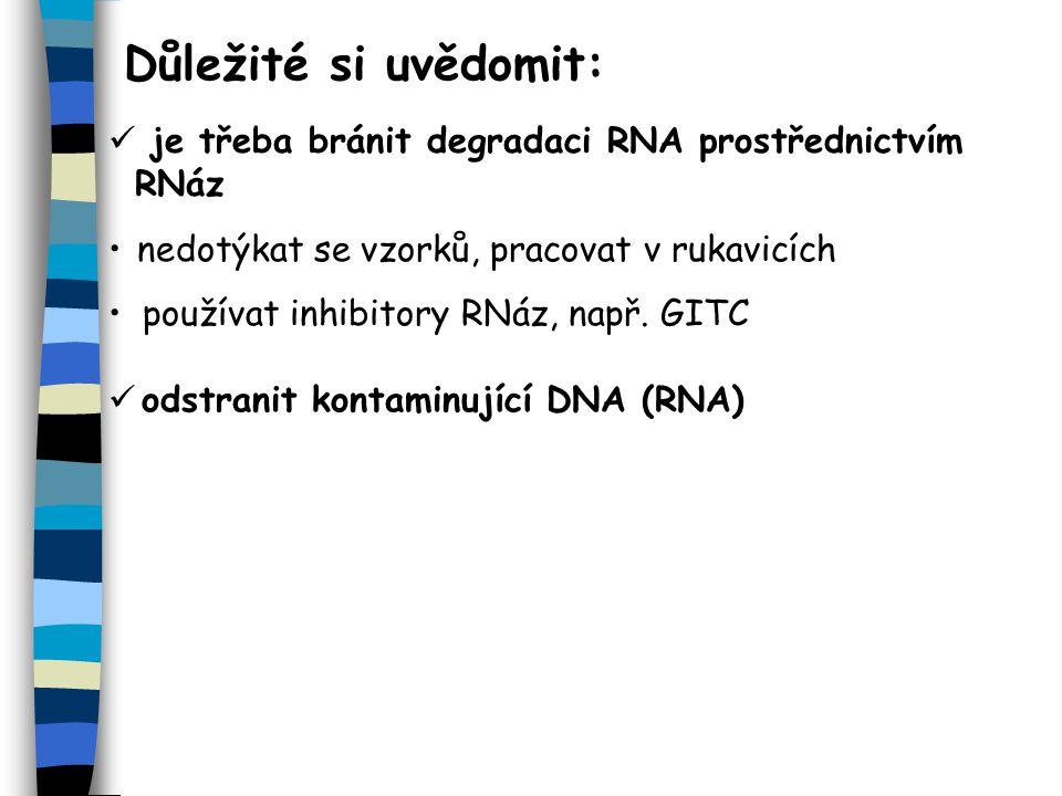 Důležité si uvědomit: je třeba bránit degradaci RNA prostřednictvím RNáz odstranit kontaminující DNA (RNA) nedotýkat se vzorků, pracovat v rukavicích používat inhibitory RNáz, např.