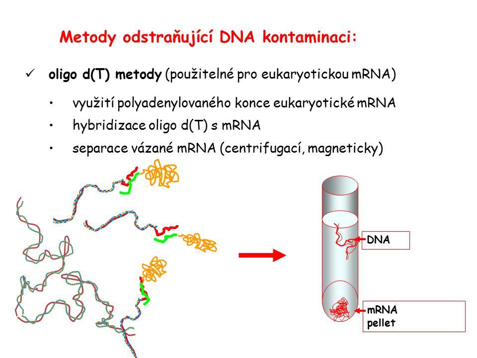 Metody odstraňující DNA kontaminaci: oligo d(T) metody (použitelné pro eukaryotickou mRNA) využití polyadenylovaného konce eukaryotické mRNA hybridizace oligo d(T) s mRNA separace vázané mRNA (centrifugací, magneticky) DNA mRNA pellet